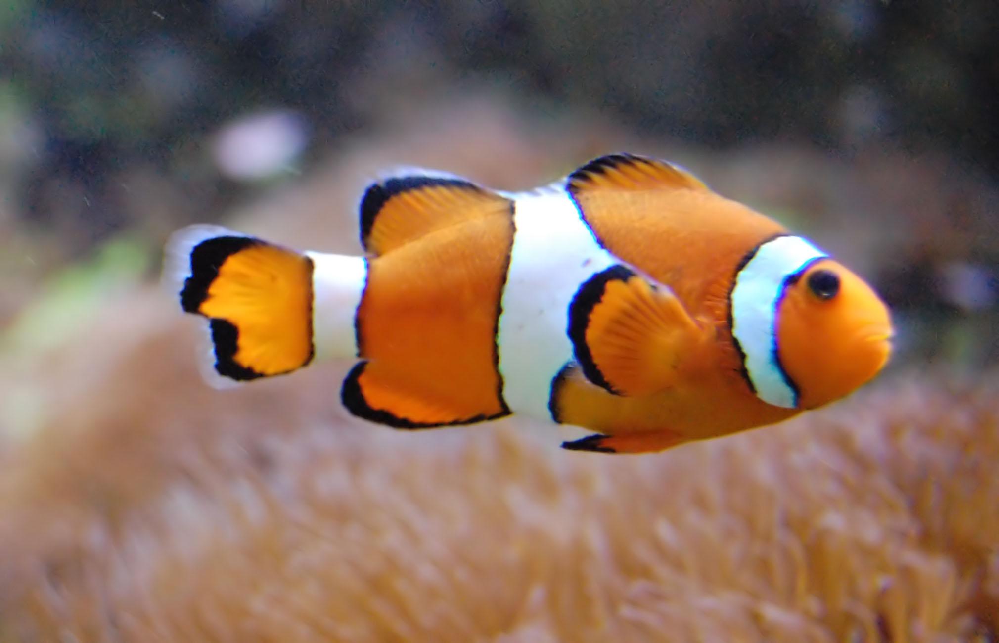 Tech sciences nos poissons d 39 avril pr f r s pop for Aquarium a poisson