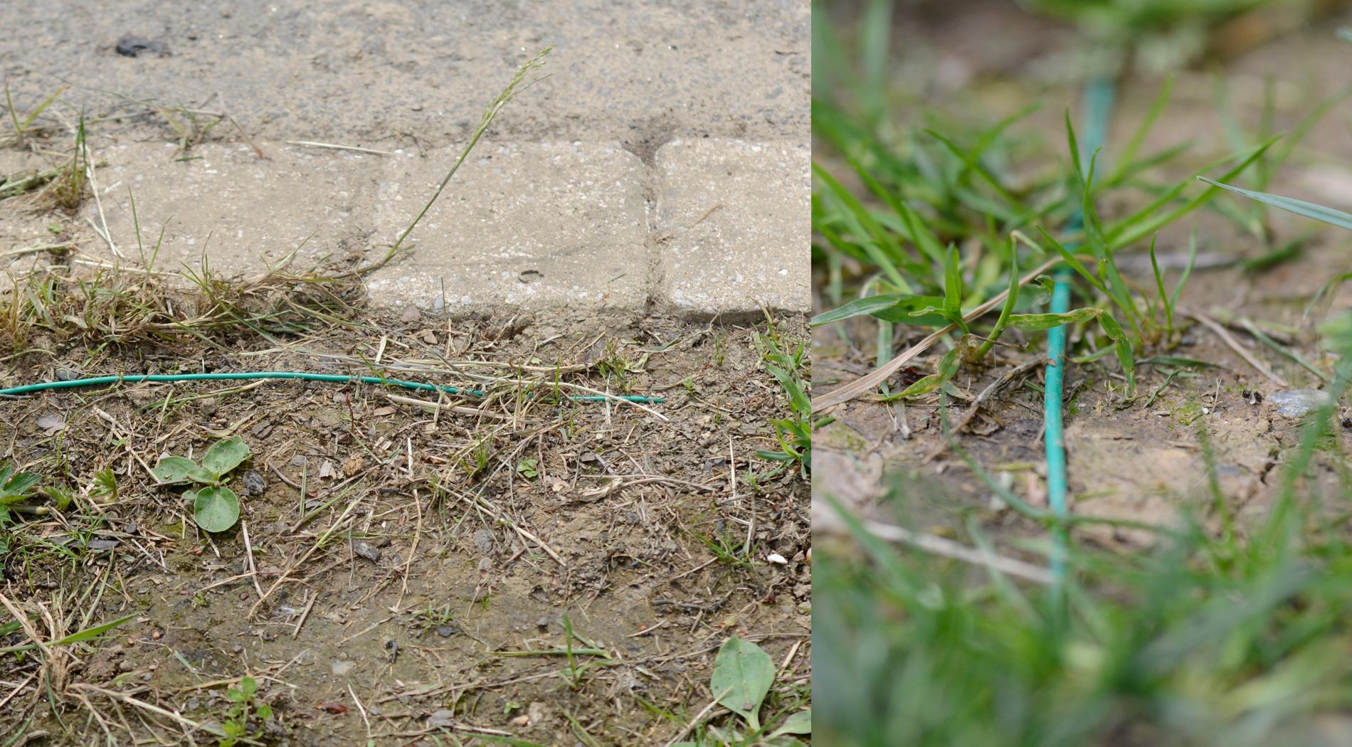 Robot tonte pelouse contrat de tonte srnit belle pelouse for Tarif pour tondre une pelouse