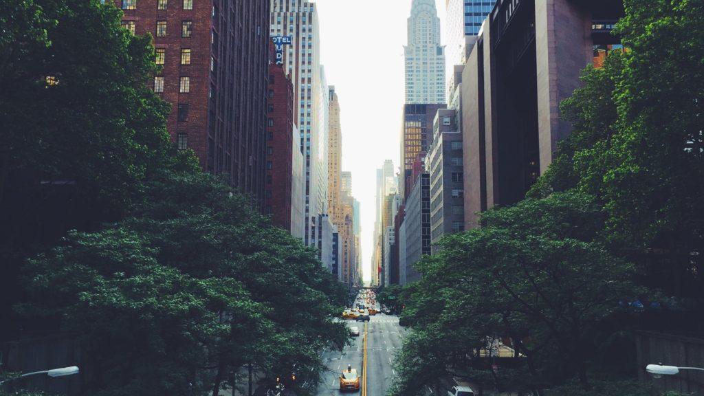 arbre-new-york