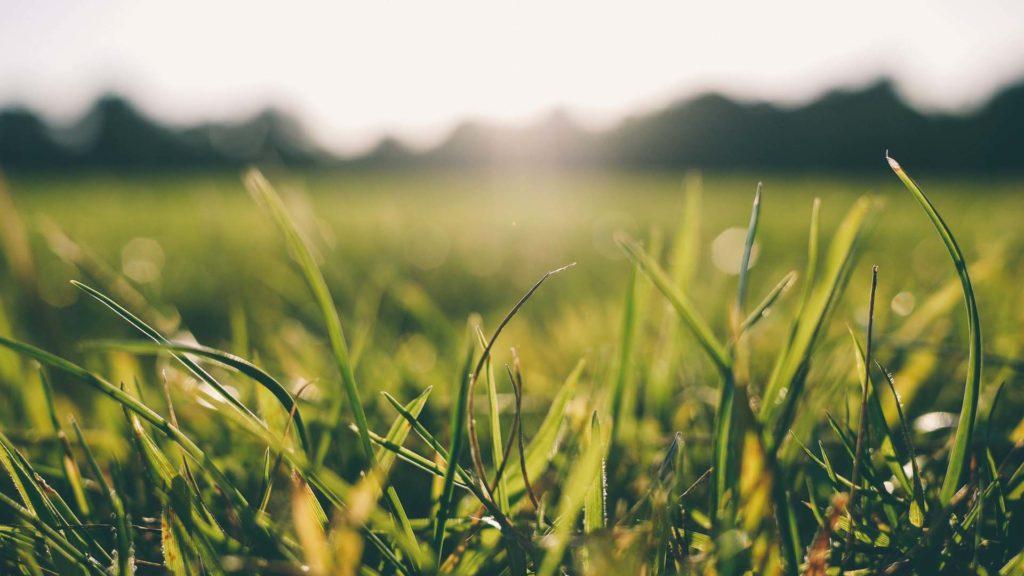 herbe-pelouse-jardin-nature-gazon