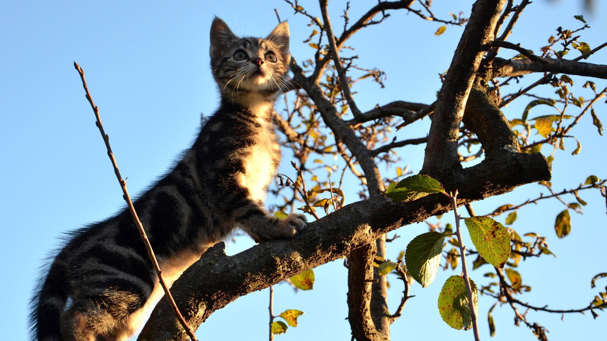 VIDÉO - C'est la journée internationale du chat, alors rions grâce à lui !