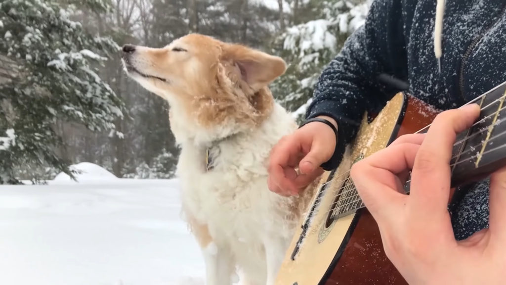 acoustictrench chien guitare