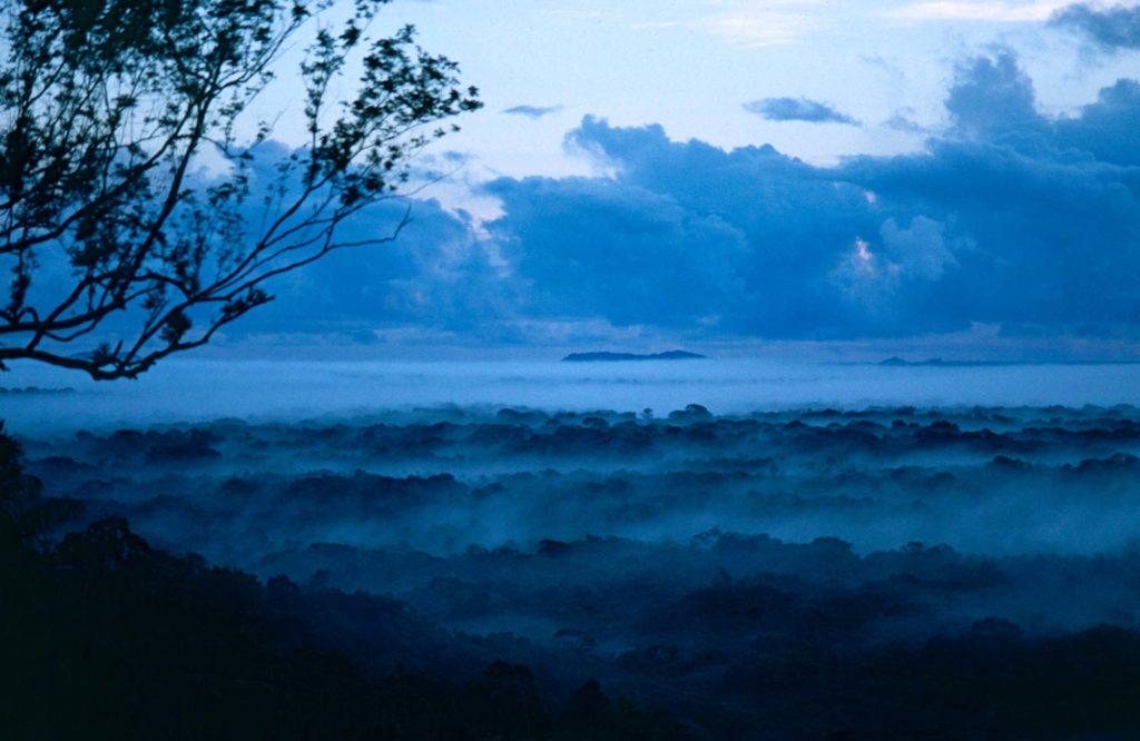 jungle-guyane-amazonie