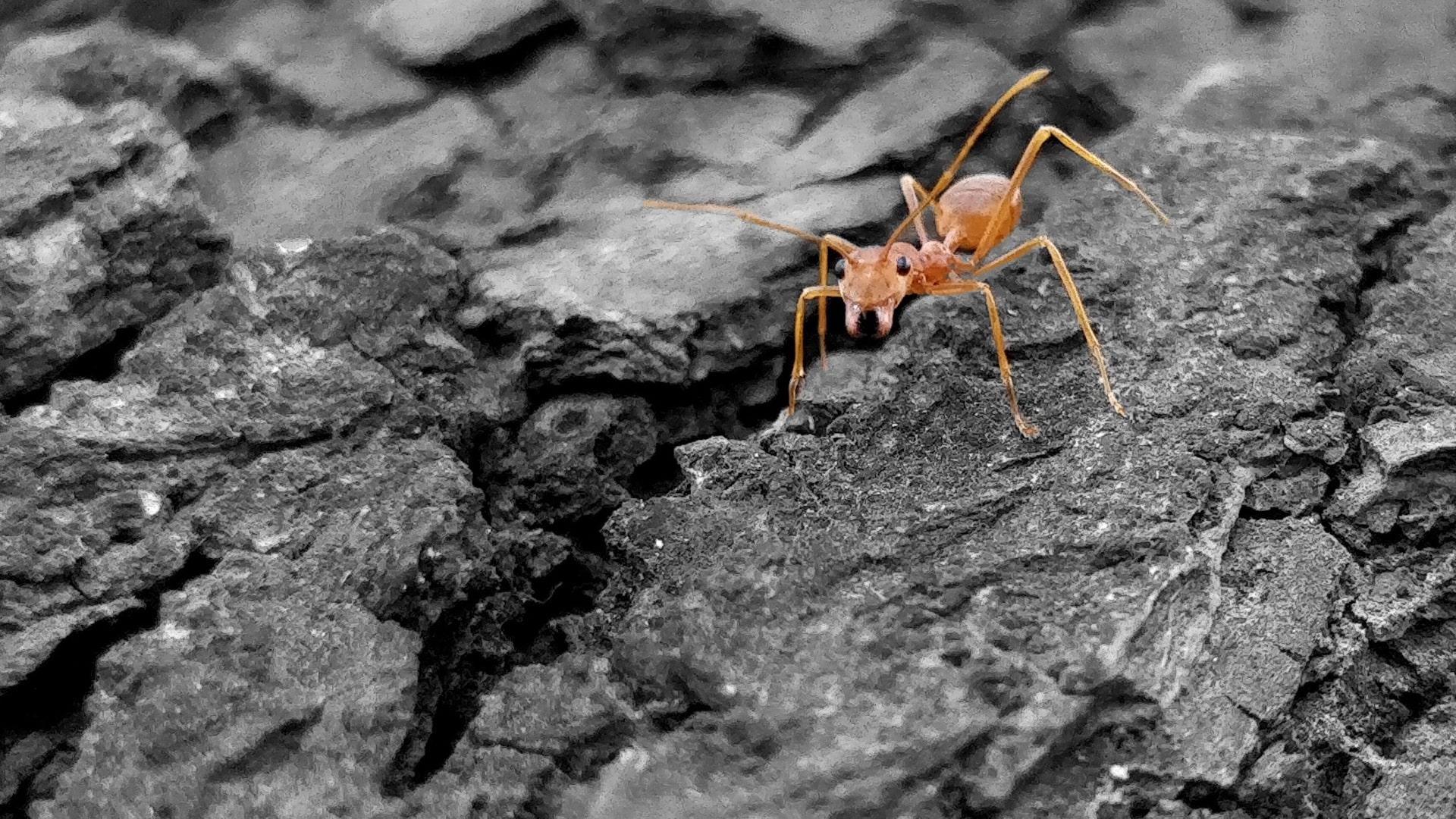 les fourmis peuvent nous apprendre comment viter les pid mies sciences numerama. Black Bedroom Furniture Sets. Home Design Ideas