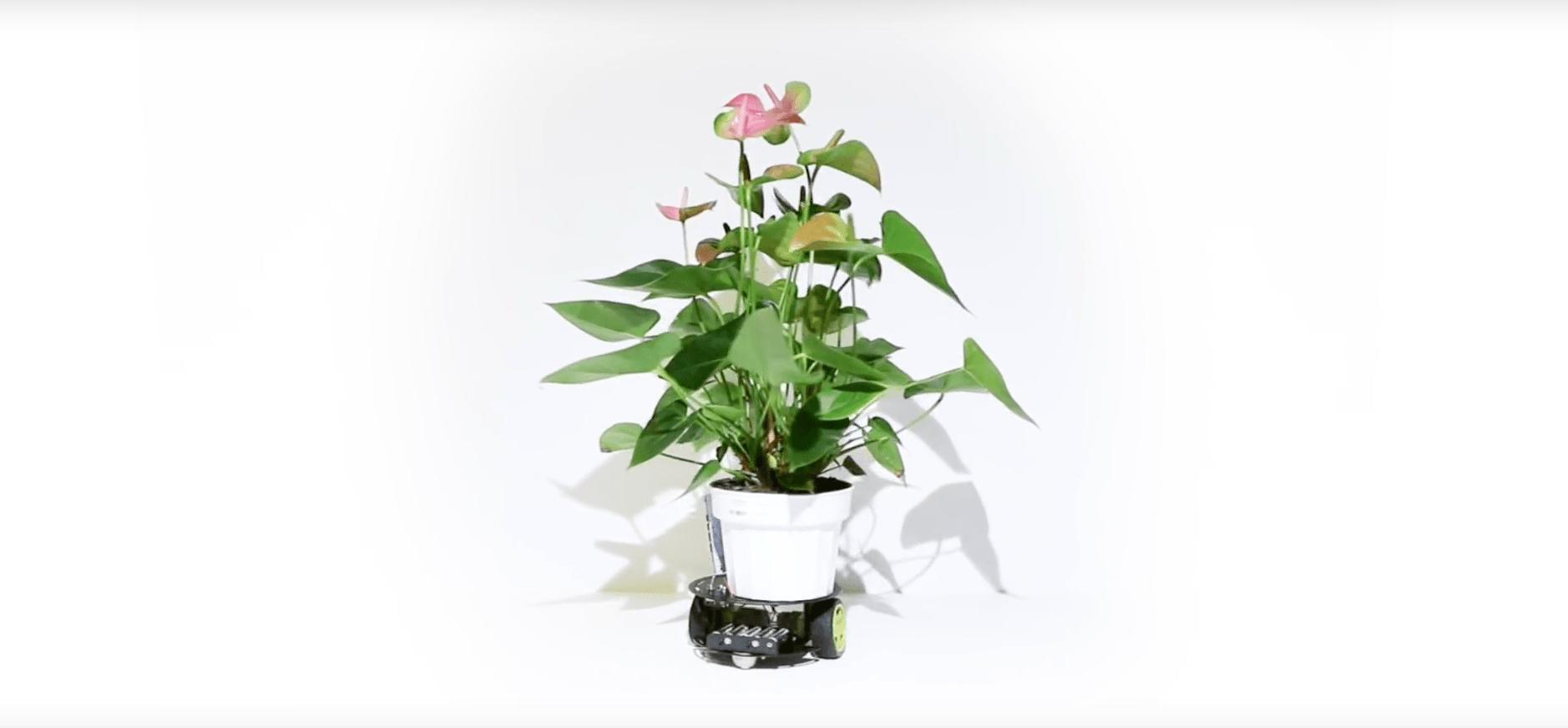 ce cyborg botanique permet une plante de se d placer. Black Bedroom Furniture Sets. Home Design Ideas
