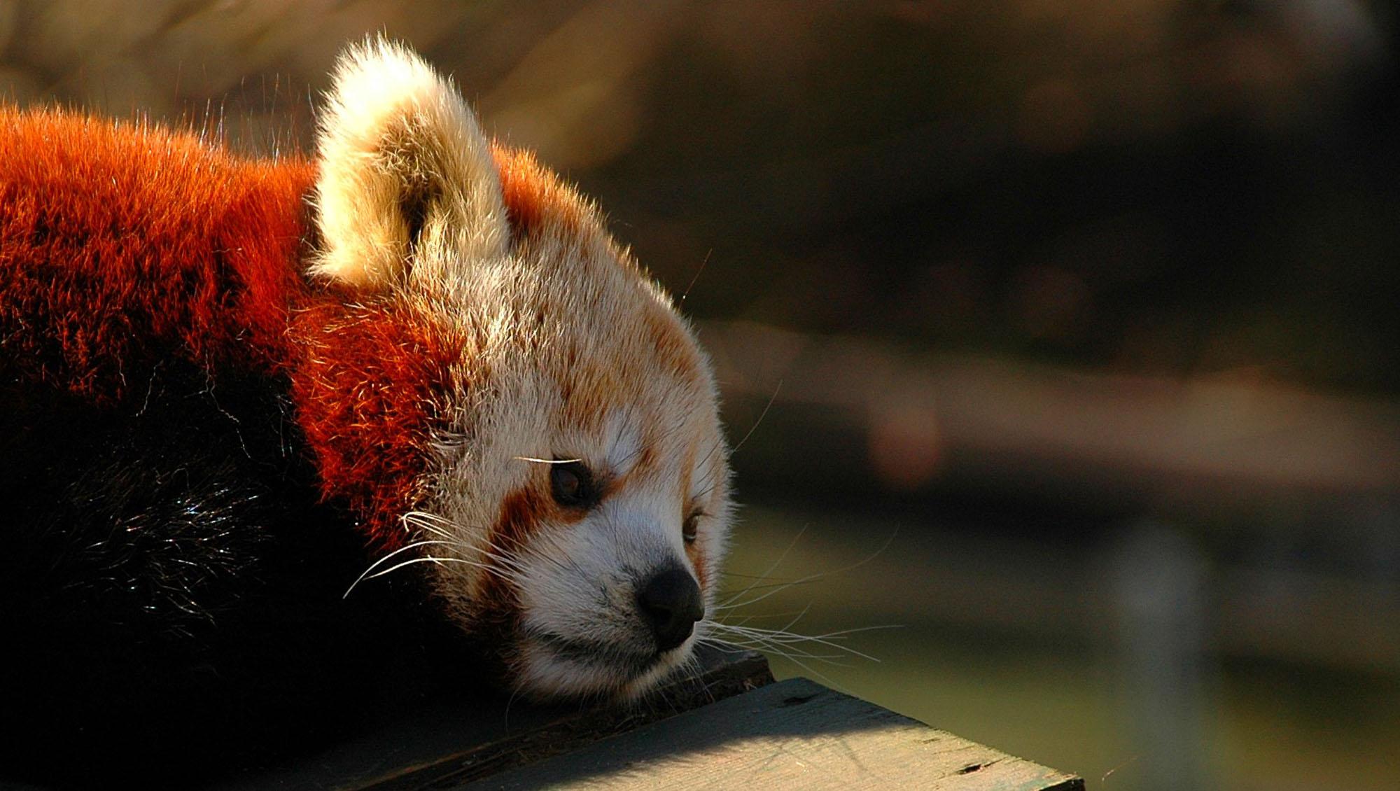 Les nouvelles versions de Firefox vont sortir plus rapidement