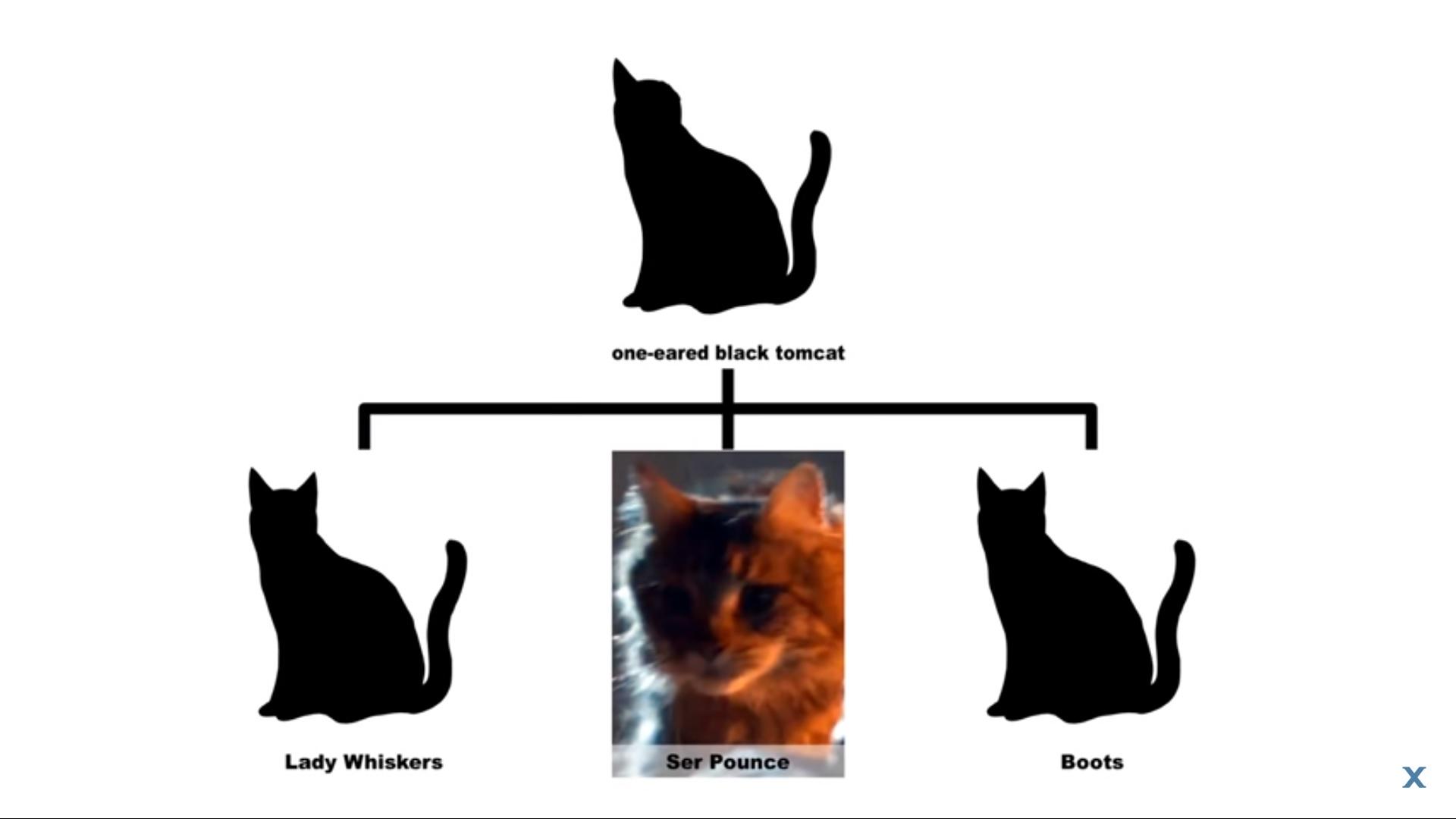 YouTube rencontres profil chats