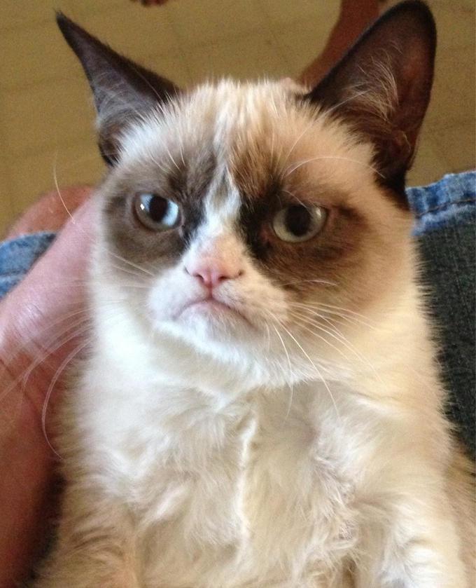 Grumpy Cat est morte