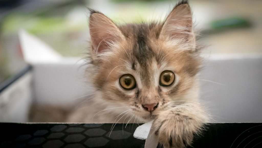 chat chaton animal