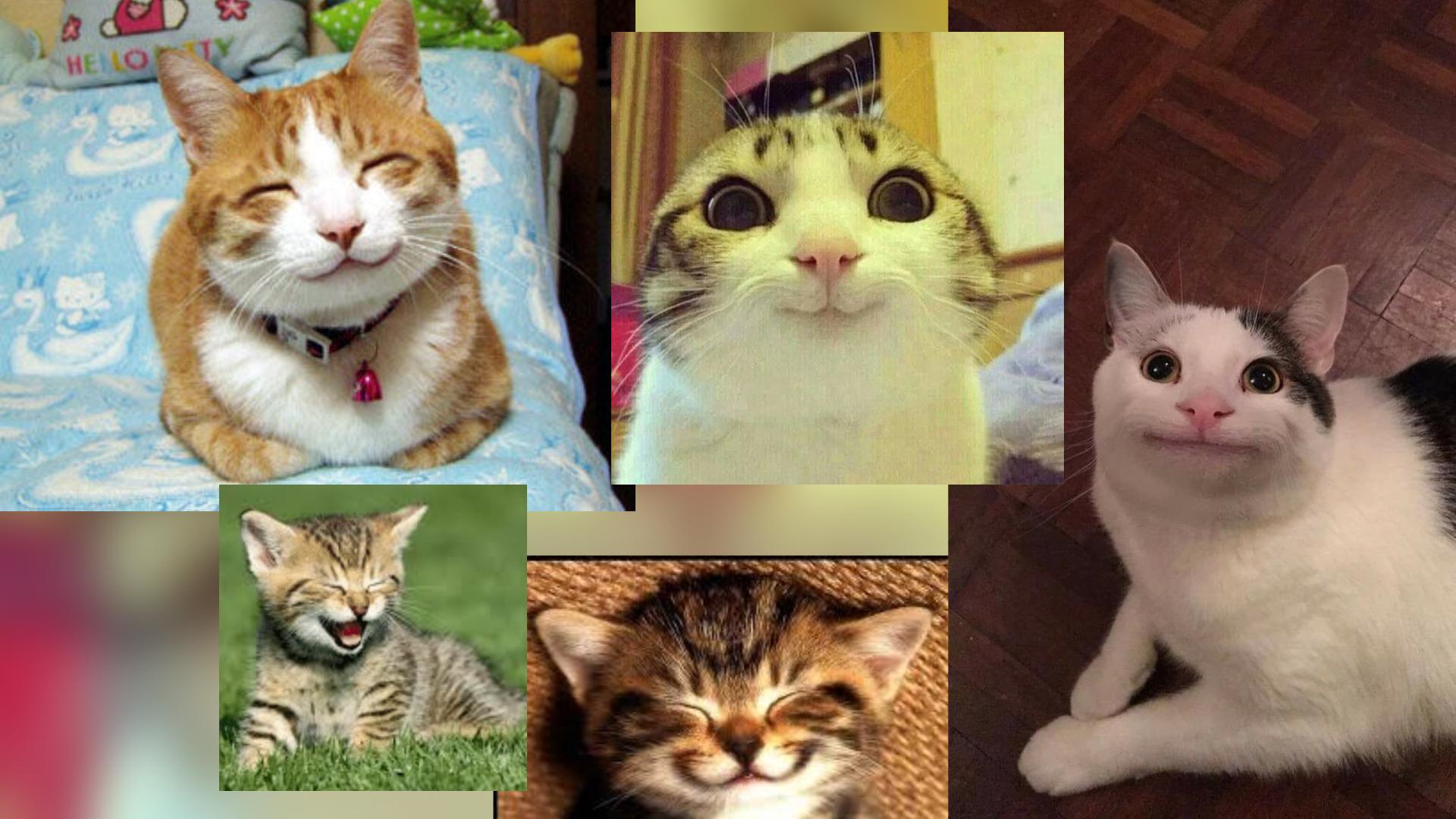 Petit précis d'histoire des mèmes de chats sur le Web (et ...