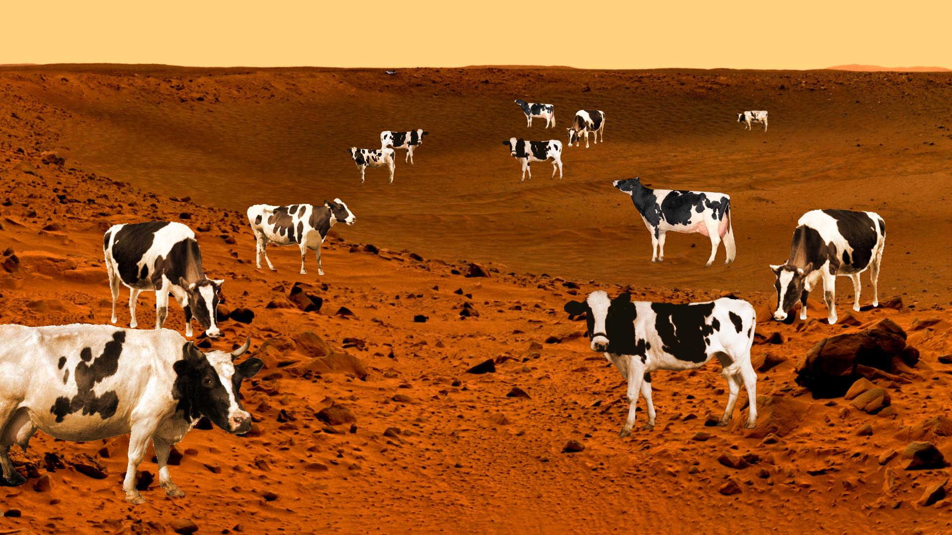 Il y a-t-il des vaches sur Mars ? Ou pourquoi le mystère du méthane passionne les astronomes