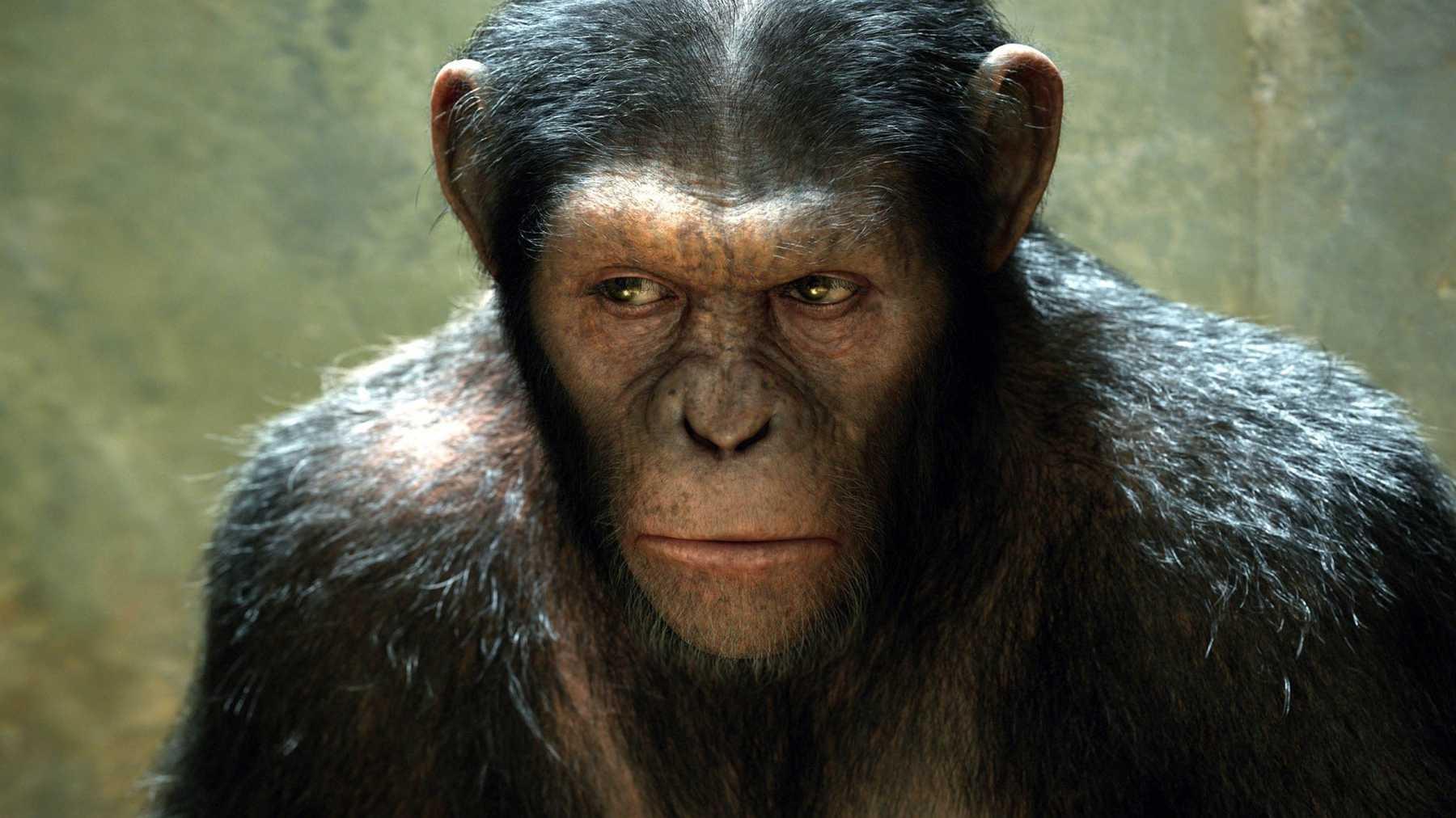 Des singes ont battu des humains à un jeu en étant bien plus intelligents et flexibles