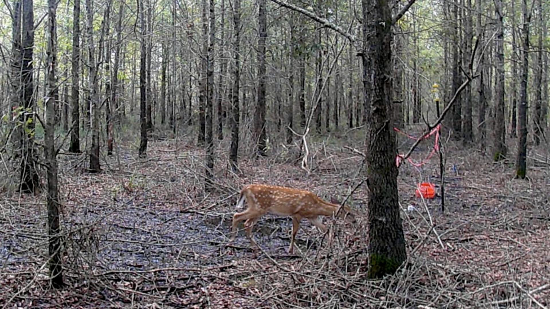 « Ce qui se passe ici n'est pas normal » : le changement climatique crée des forêts fantômes