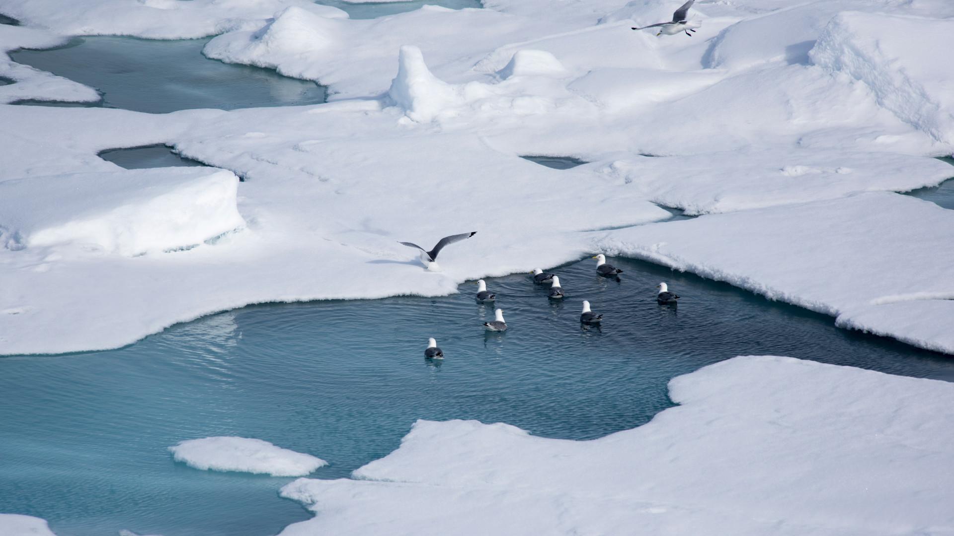La banquise arctique s'amincirait jusqu'à deux fois plus vite qu'on le pensait