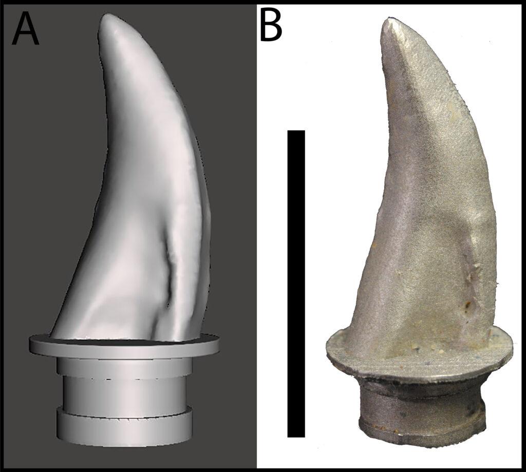 Modèle de dent du spécimen