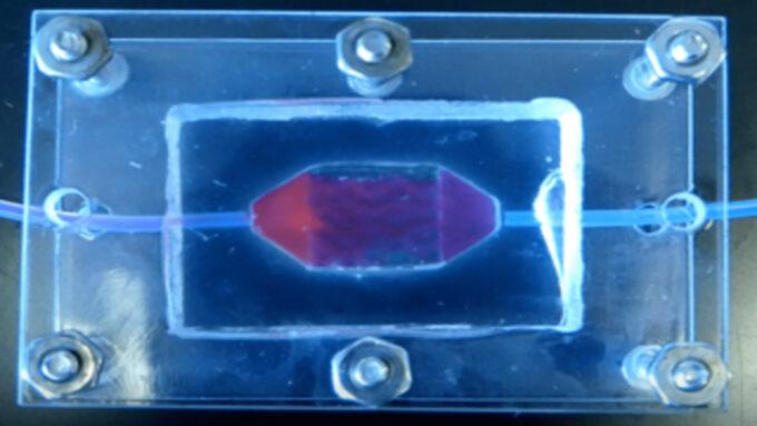 Test de perfusion sur un tissu humain créé en laboratoire