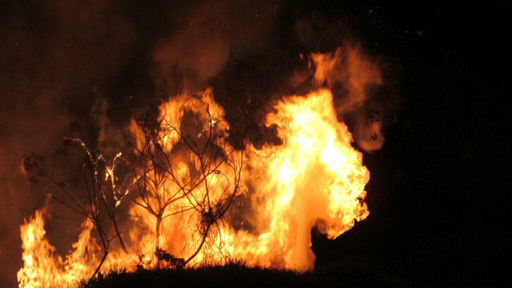 Incendie en forêt.